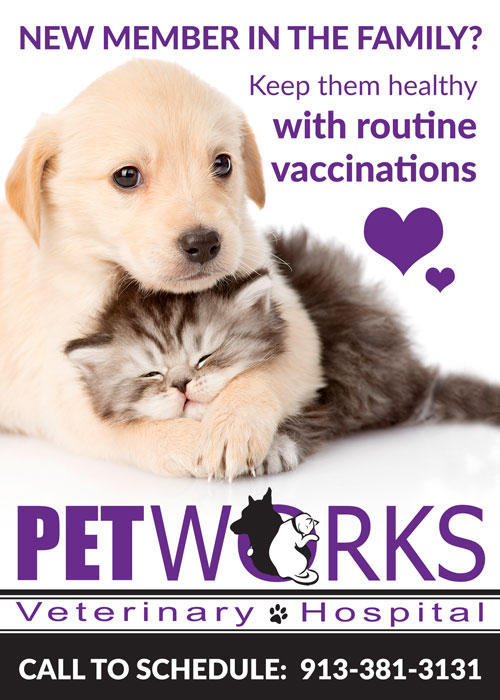 new pet vaccinations kansas city petworks veterinary hospital in overland park ks